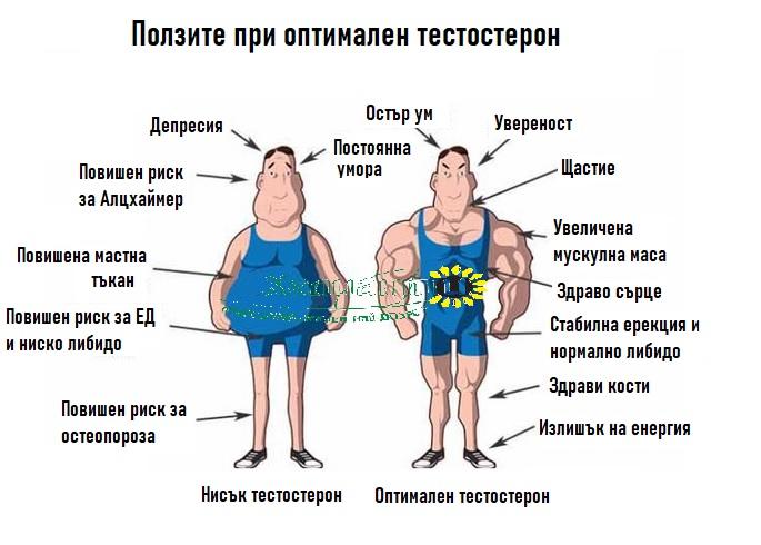 Оптимален и нисък тестостерон