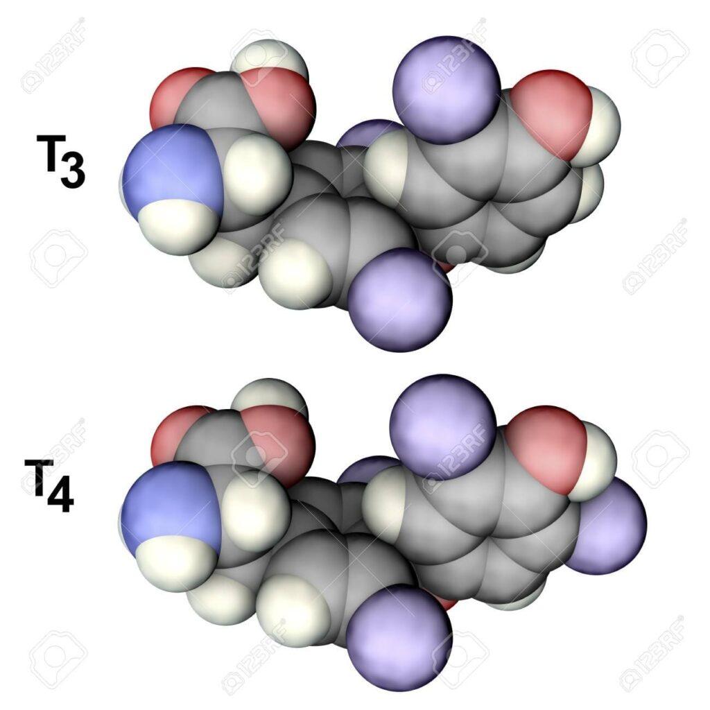 Молекули на хормони на щитовидната жлеза T3 и T4, 3D илюстрация. Трийодтиронин и тироксин